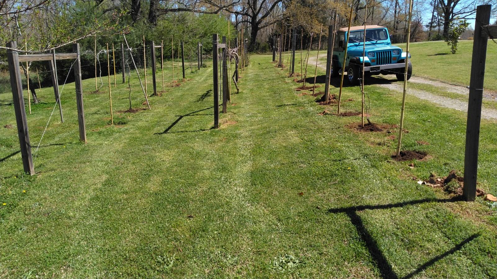 Rebuilding the little vineyard