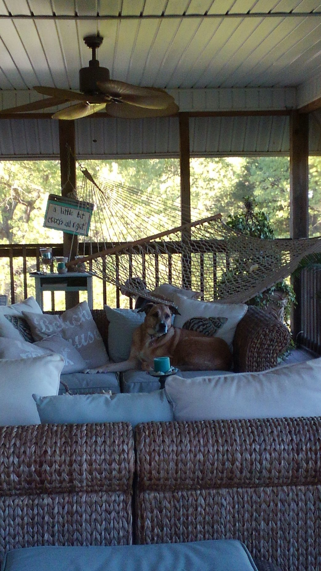 If a dog likes a porch…
